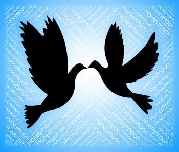 Honeymoon Doves Indicates Love Birds And Destination