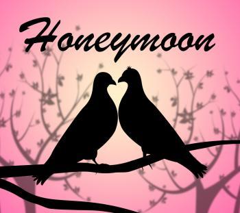 Honeymoon Doves Means Love Birds And Break