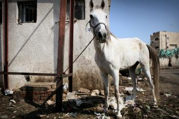 Horse kept by trash