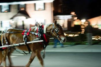 Horse on street