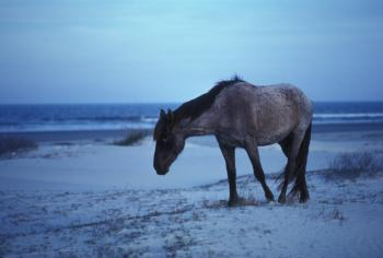Horse on the Shore