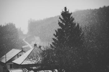 Houses and Pine Tree