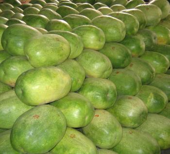 Huge Watermelons
