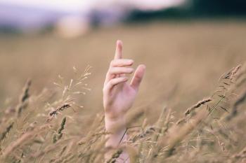 Human Hand Near Brown Grains at Daytime