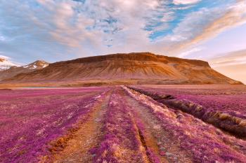 Iceland Sunset Tractor Trail - Tickle Me Purple