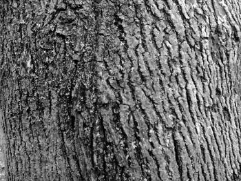 image of bark