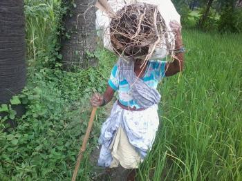 Indian old lady farmer
