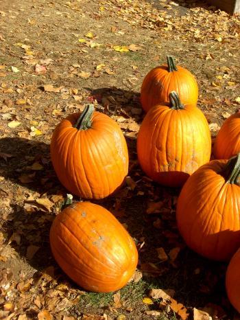 Individual Pumpkins