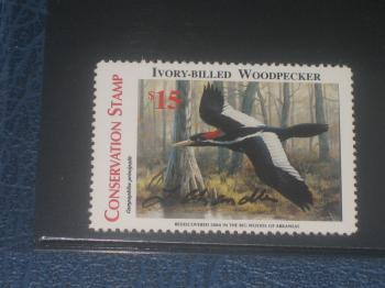 Ivory Stamp