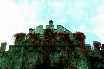 Ivy covered castle wall