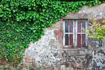 Ivy Covered Wall
