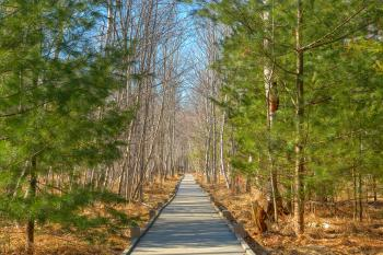 Jesup Boardwalk Trail - HDR