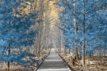 Jesup Boardwalk Trail - Solar Winter HDR