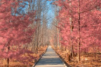 Jesup Boardwalk Trail - Tickle Me Pink HDR