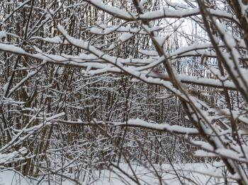 Just some branches cover with snow