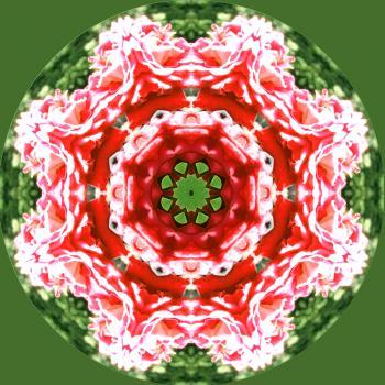 kaleidoscope flower mandala