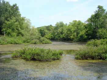 Kessler Swamp State Nature Preserve