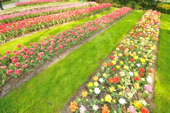 Keukenhof Holland Creative Commons by gnuckx