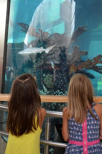 Kids near aquarium