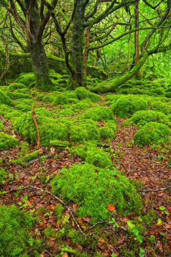 Killarney Forest - HDR