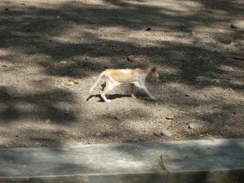 Kitten at Surabaya Zoo