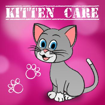 Kitten Care Means Looking After And Loving Cats