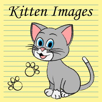 Kitten Images Shows Domestic Cat And Cats