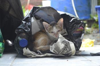 Kitten in a plastic bag