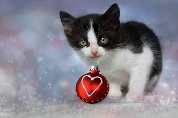 Kitten in Christmas