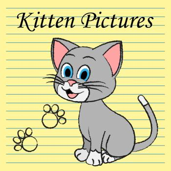 Kitten Pictures Indicates Feline Images And Photos