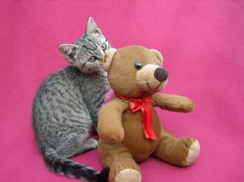 Kitten with Bear