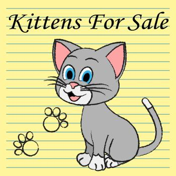 Kittens For Sale Shows Cats On Market And Advertisement