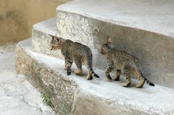 Kittens on the Street