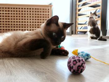 Kitty playtime shoot