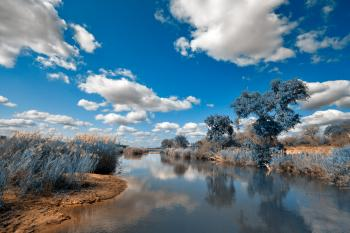 Kruger Park Landscape - Winter Blue