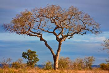 Kruger Park Scenery - HDR