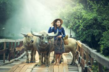 Lady with Cows