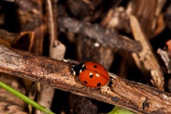Ladybug macros