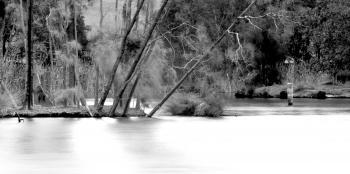 Lake in Bicentennial Park