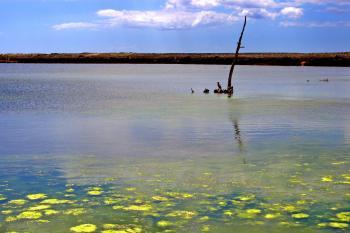 Lake in Quinta do Lago