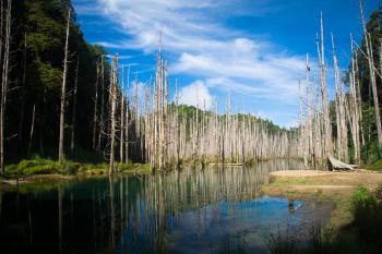 Lake Photo during Daytime