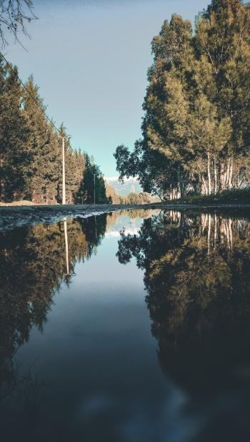 Landscape Photo of River Between Trees