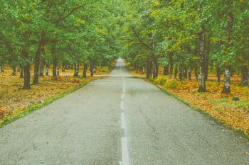 Landscape Photography of Concrete Road Between Trees