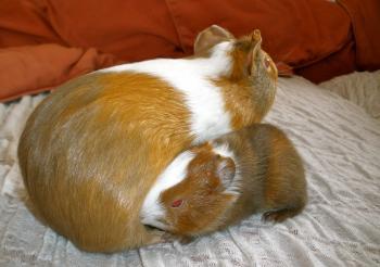 Lara & Twinkie