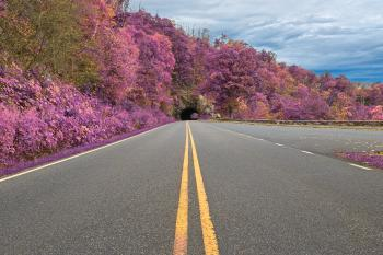 Lavender Skyline Drive - HDR