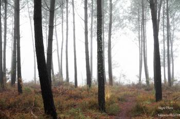 Le brouillard dans la Lande