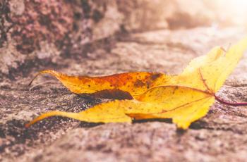 Leaf under Sun
