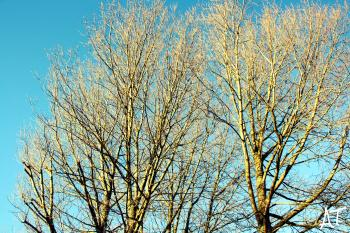 Leafless Tree Under Blue Sky at Daytime