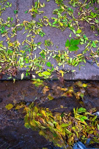 leafs on asphalt
