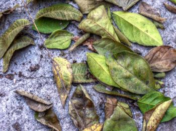 Leafs on ground